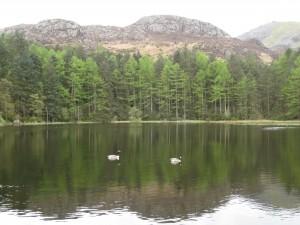 Llyn Llewelyn, Beddgelert Forest
